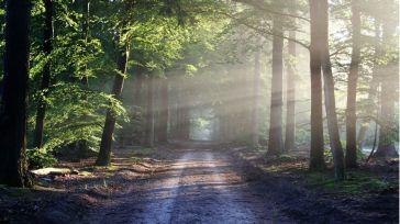 El gobierno destina 8 millones al 'Plan Renove' para el sector forestal de la región