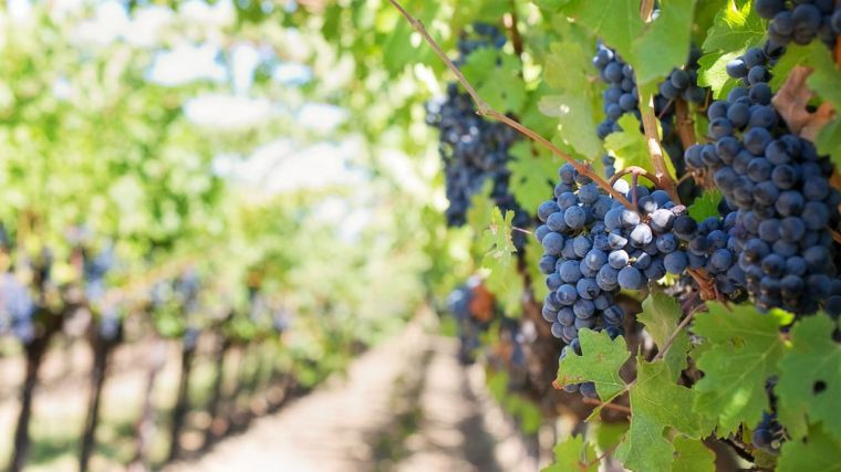 Castilla-La Mancha inicia el día 16 el pago de 348 millones de la PAC correspondiente a pago básico, verde y régimen de jóvenes agricultores