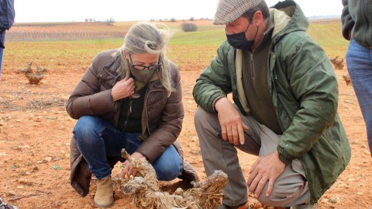 Merino (PP) denuncia el daño causado al campo por la superpoblación de conejos y critica la falta de actuación de Agricultura