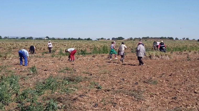 La Región se dota de nuevas medidas para evitar brotes entre los temporeros de las campañas agrícolas