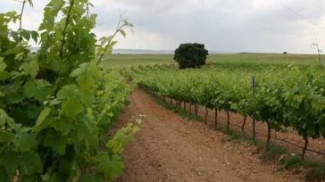 Castilla-La Mancha recibe más de 13,7 millones de euros para programas de desarrollo rural y agroalimentarios