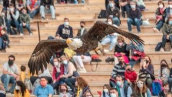El programa 'Aquí la Tierra' emite este viernes un reportaje sobre las más de 200 aves que habitan Puy du Fou en Toledo
