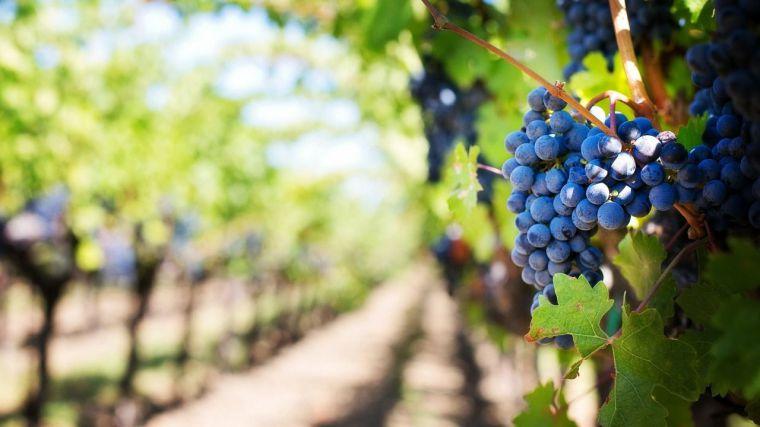 Los elevados excedentes de vino a causa de la pandemia ponen en riesgos los precios y UPA pide ayudas urgentes al sector