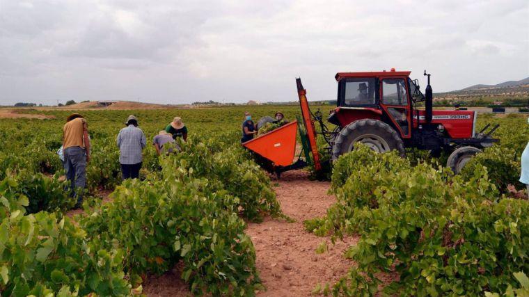 CLM estima un 20% menos de uva, garantiza precios justos y apunta a bajas cosechas en Europa para augurar buena campaña