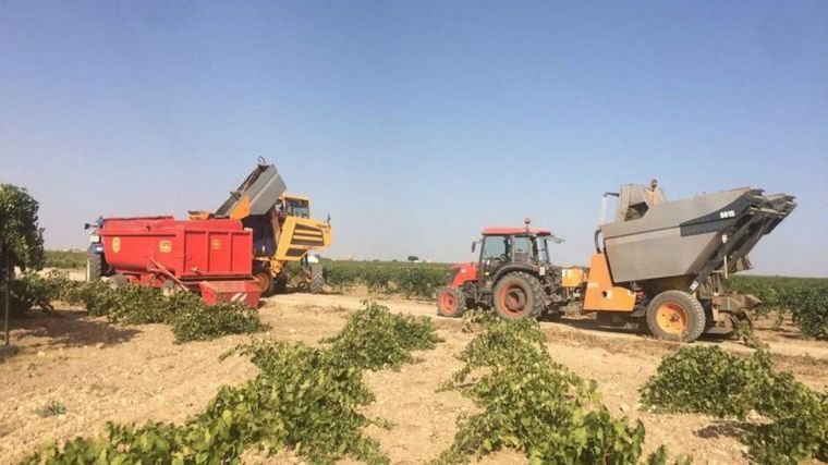 Unión de Uniones denuncia que los precios de la uva en CLM no alcanzan el umbral de rentabilidad mínimo
