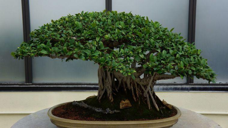 La Diputación de Toledo ofrece un nuevo taller de iniciación al bonsái