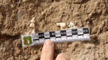 Descubren una posible necrópolis romana en la provincia de Toledo